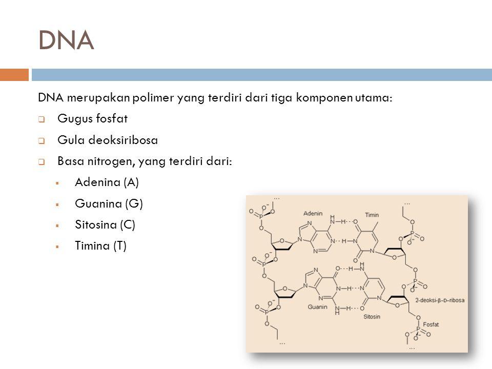 DNA DNA merupakan polimer yang terdiri dari tiga komponen utama: