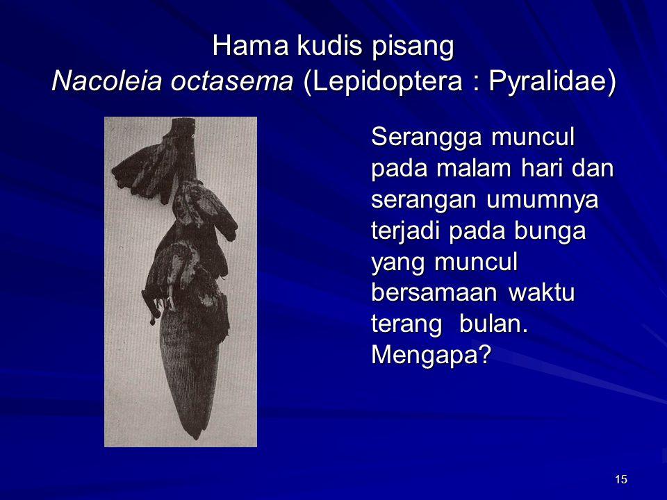 Hama kudis pisang Nacoleia octasema (Lepidoptera : Pyralidae)