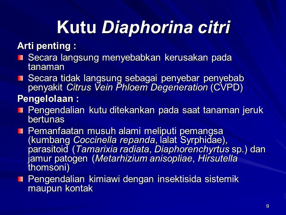 Kutu Diaphorina citri Arti penting :