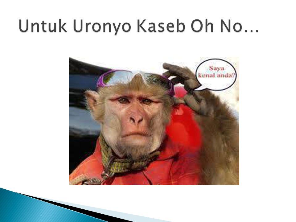 Untuk Uronyo Kaseb Oh No…