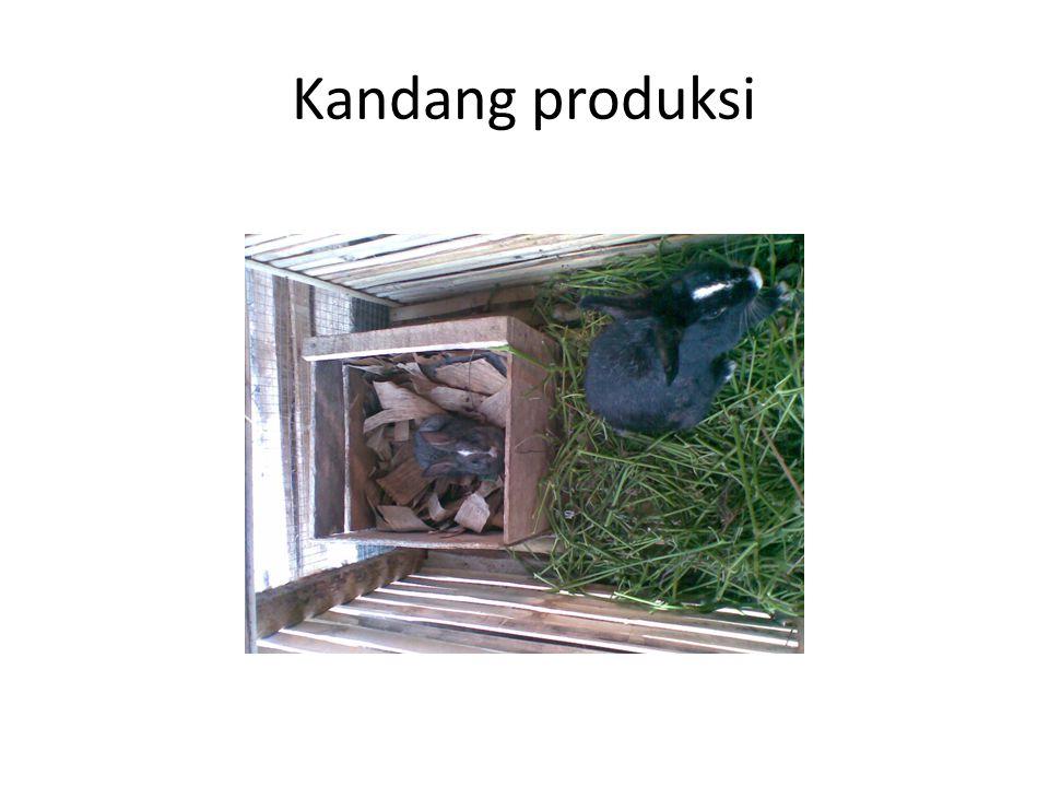 Kandang produksi