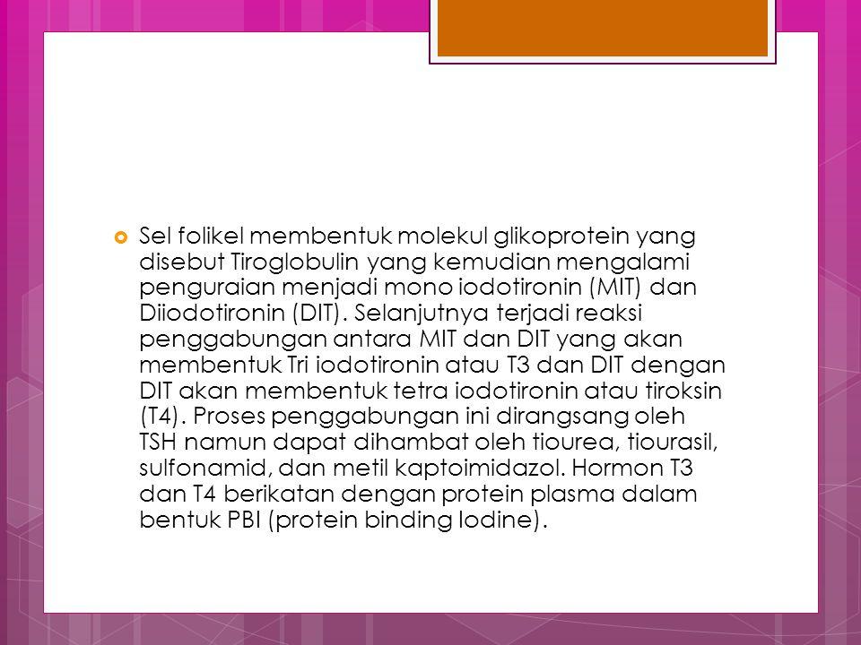Sel folikel membentuk molekul glikoprotein yang disebut Tiroglobulin yang kemudian mengalami penguraian menjadi mono iodotironin (MIT) dan Diiodotironin (DIT).