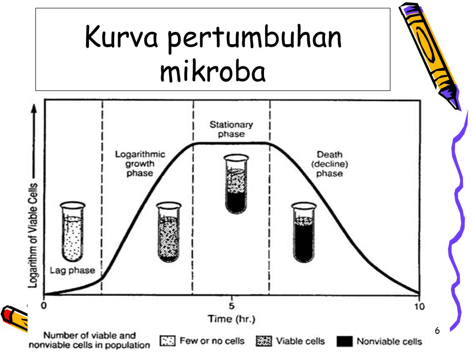 Kurva pertumbuhan mikroba