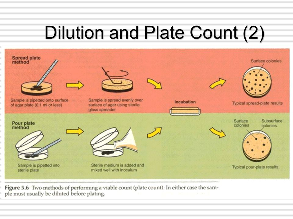 Dilution and Plate Count (2)
