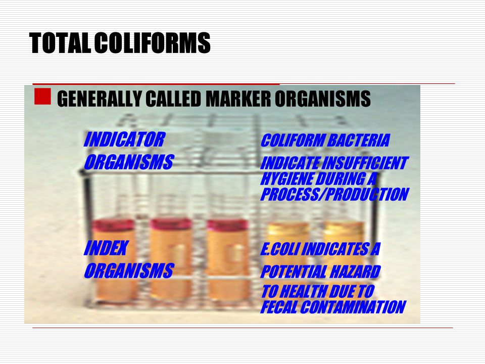 TOTAL COLIFORMS GENERALLY CALLED MARKER ORGANISMS