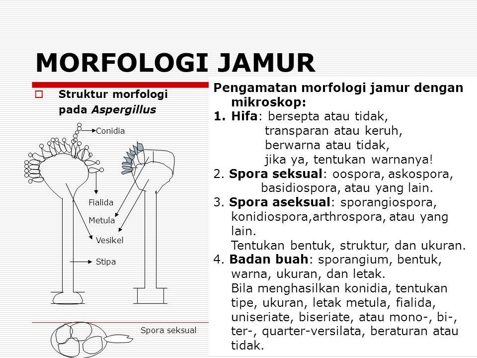 MORFOLOGI JAMUR Pengamatan morfologi jamur dengan mikroskop: