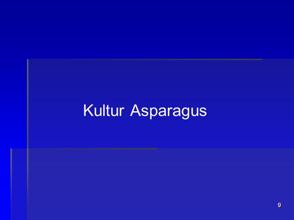 Kultur Asparagus
