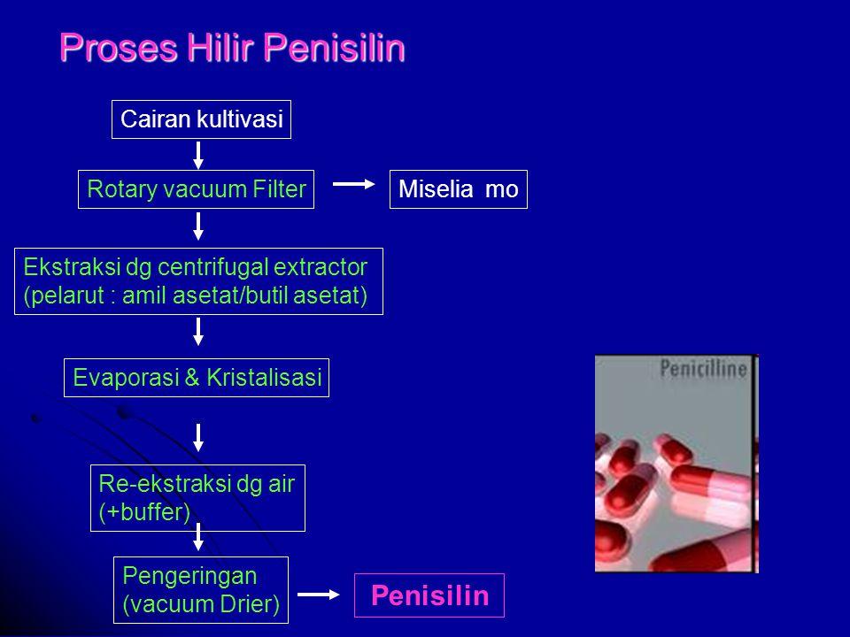 Proses Hilir Penisilin