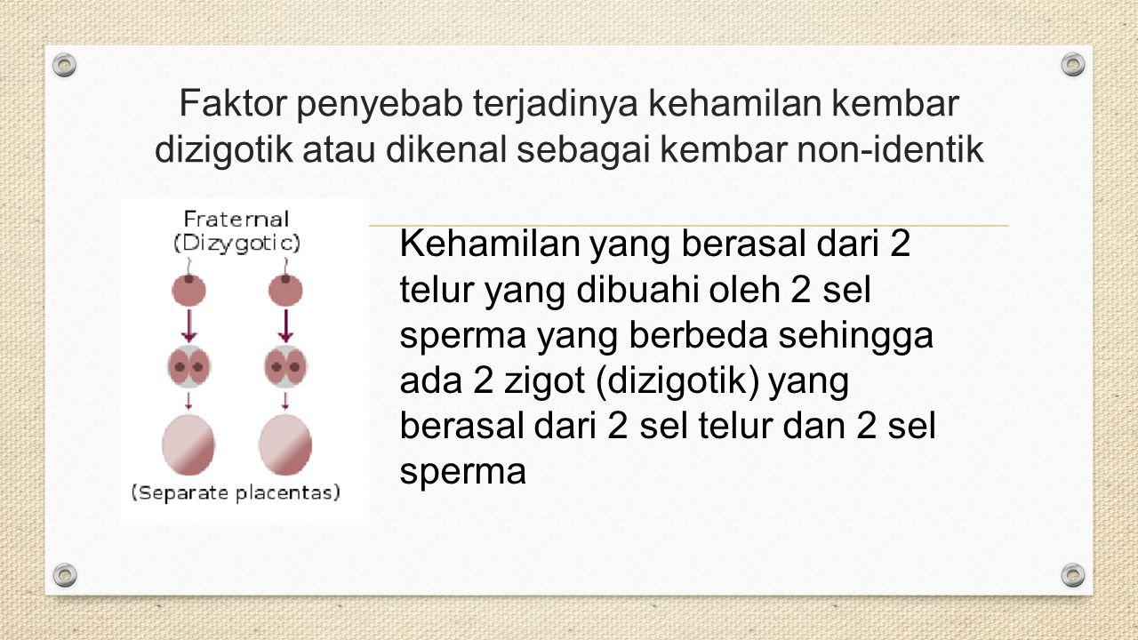 Faktor penyebab terjadinya kehamilan kembar dizigotik atau dikenal sebagai kembar non-identik
