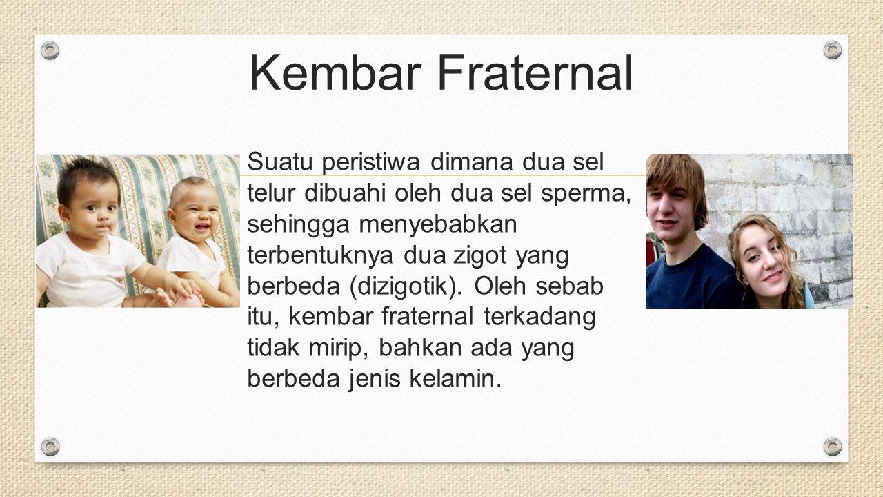 Kembar Fraternal