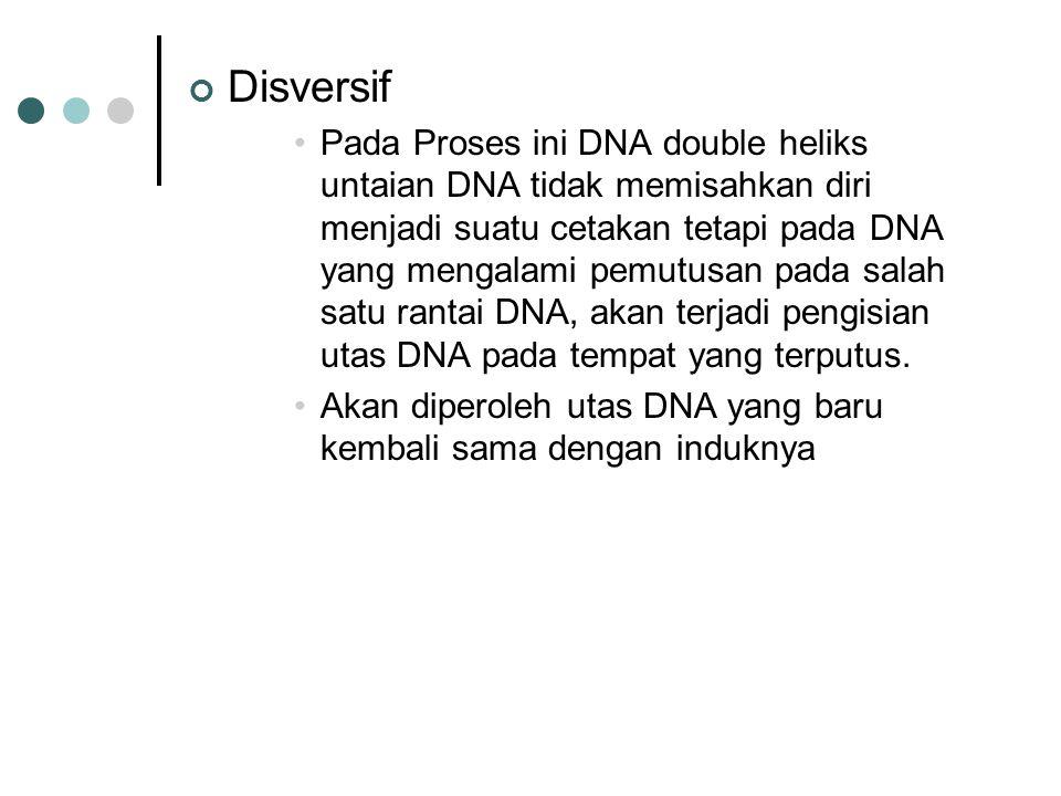 Disversif