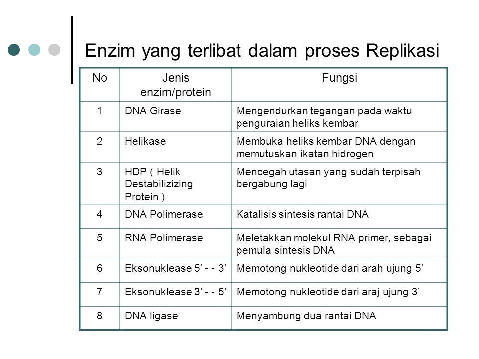 Enzim yang terlibat dalam proses Replikasi
