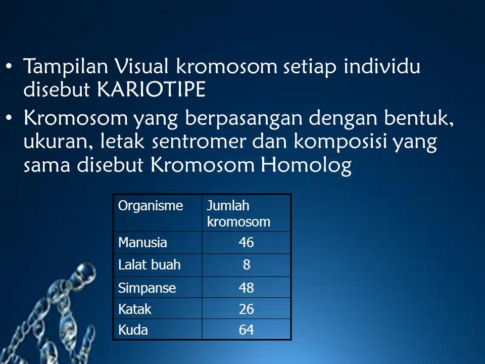 Tampilan Visual kromosom setiap individu disebut KARIOTIPE