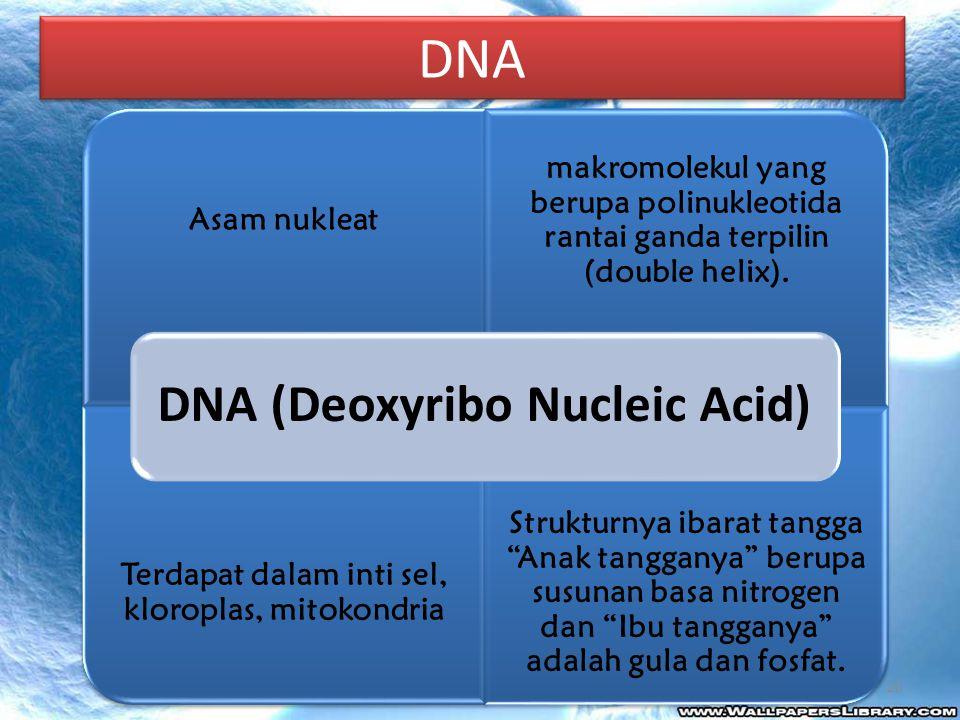 DNA DNA (Deoxyribo Nucleic Acid) Asam nukleat. makromolekul yang berupa polinukleotida rantai ganda terpilin (double helix).