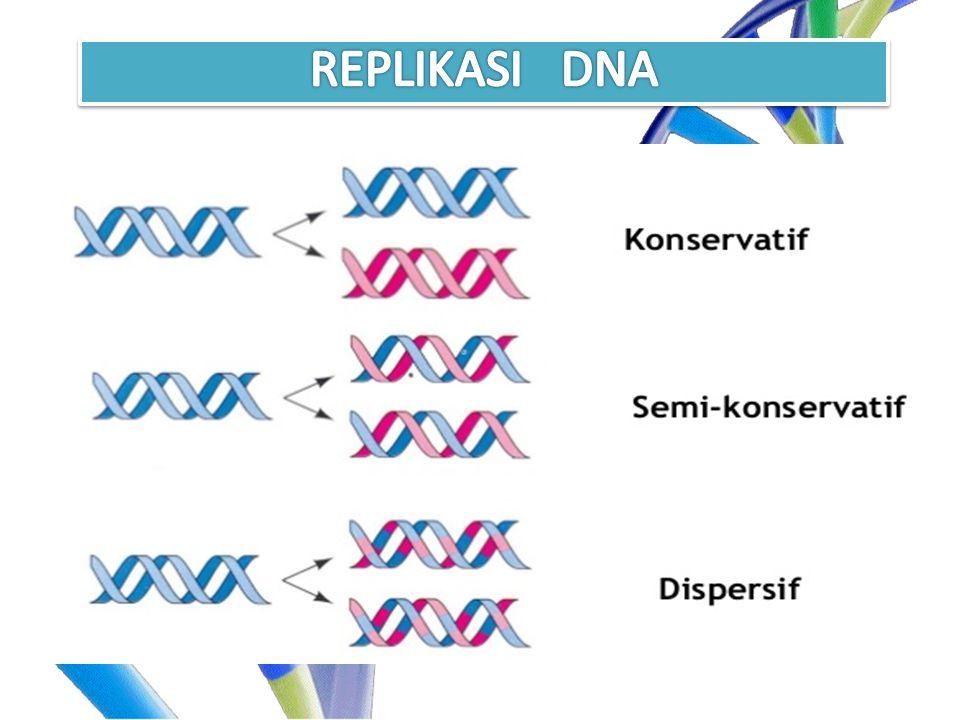 REPLIKASI DNA