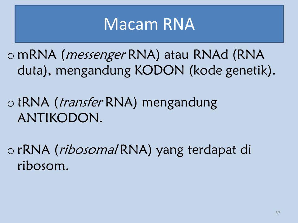 Macam RNA mRNA (messenger RNA) atau RNAd (RNA duta), mengandung KODON (kode genetik). tRNA (transfer RNA) mengandung ANTIKODON.
