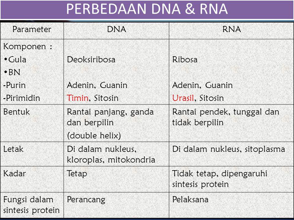 PERBEDAAN DNA & RNA Parameter DNA RNA Komponen : Gula BN Purin