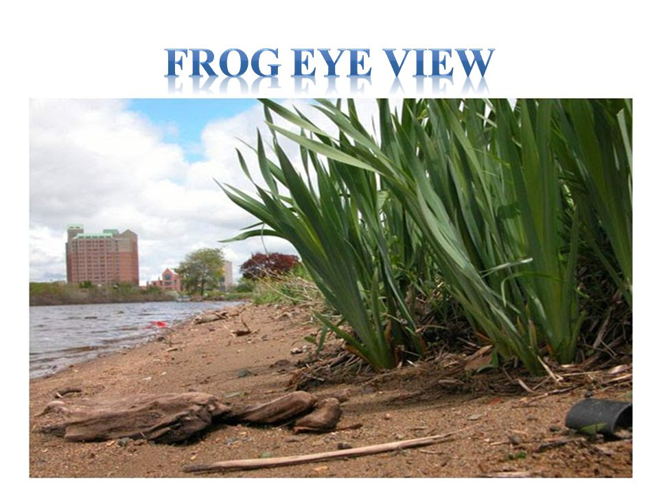 Frog Eye View