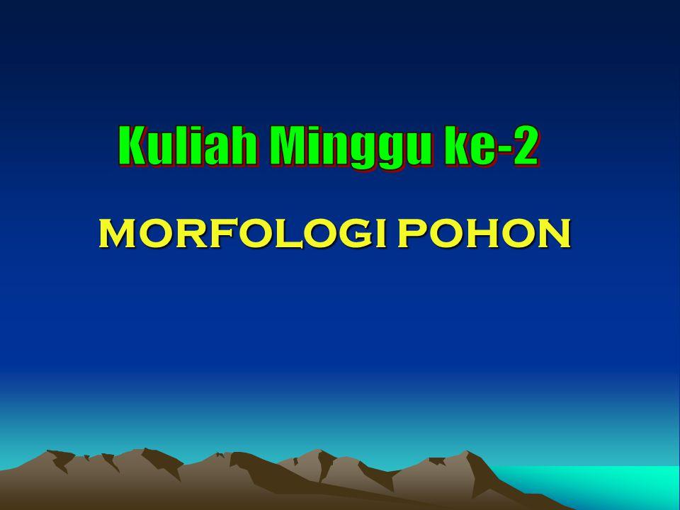 Kuliah Minggu ke-2 MORFOLOGI POHON