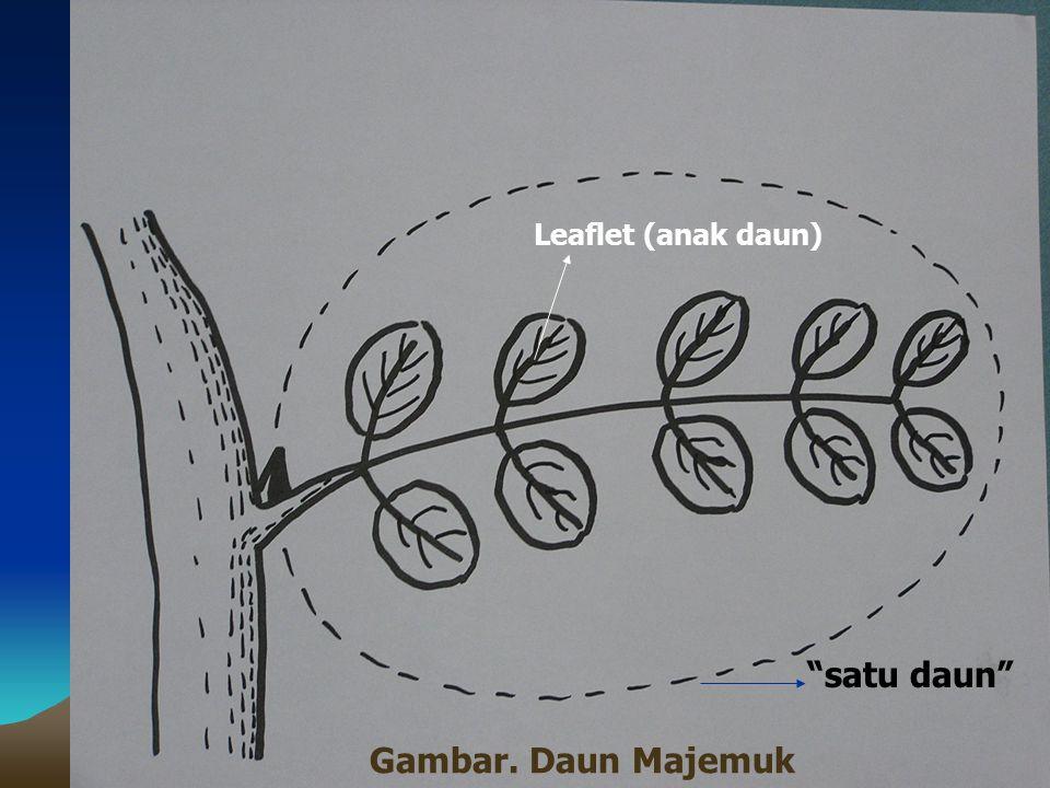 Leaflet (anak daun) satu daun Gambar. Daun Majemuk