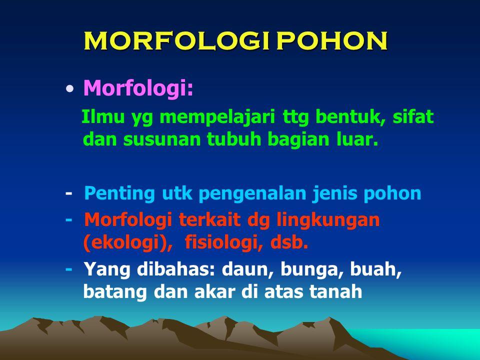 MORFOLOGI POHON Morfologi: