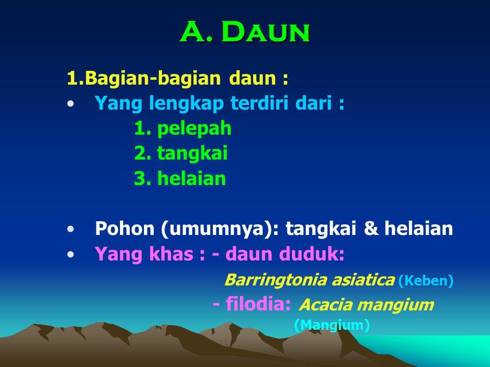 A. Daun 1.Bagian-bagian daun : Yang lengkap terdiri dari : 1. pelepah