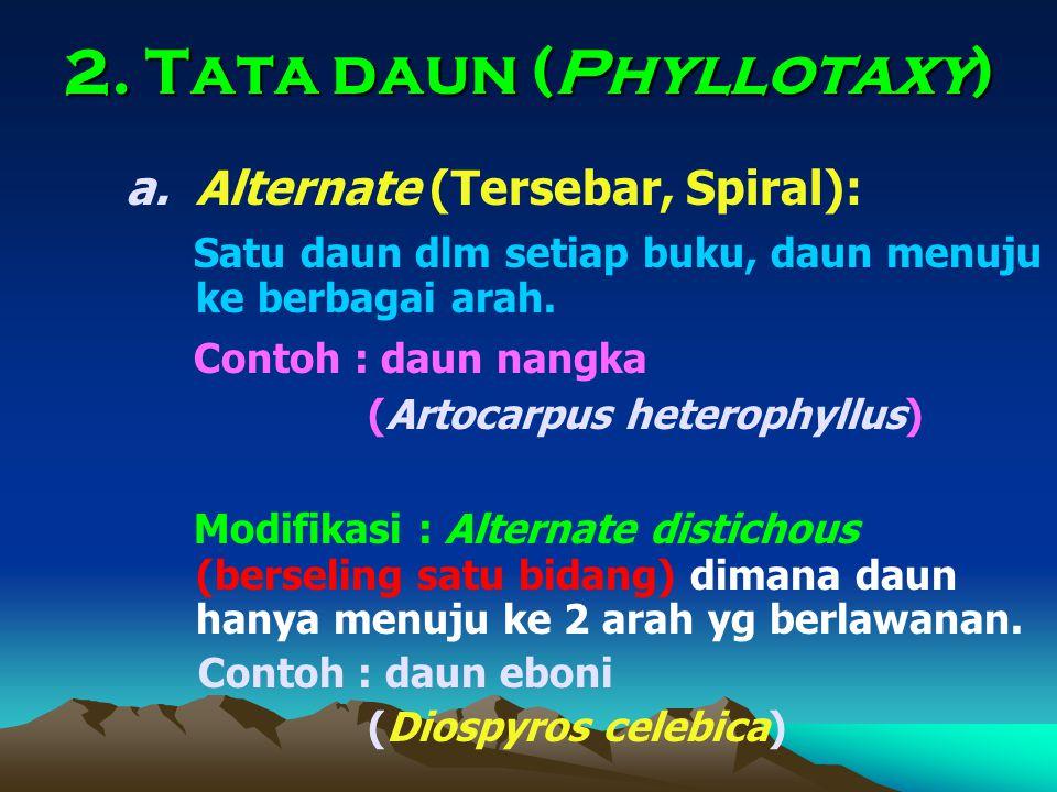 2. Tata daun (Phyllotaxy)