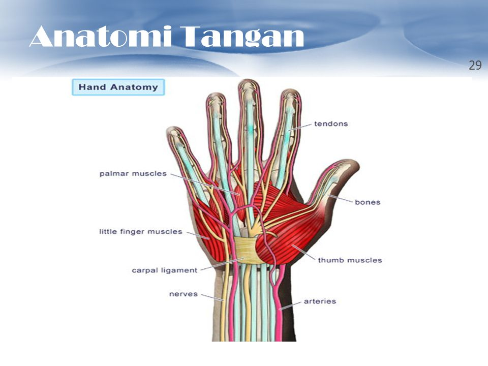 Anatomi Tangan TOUCH