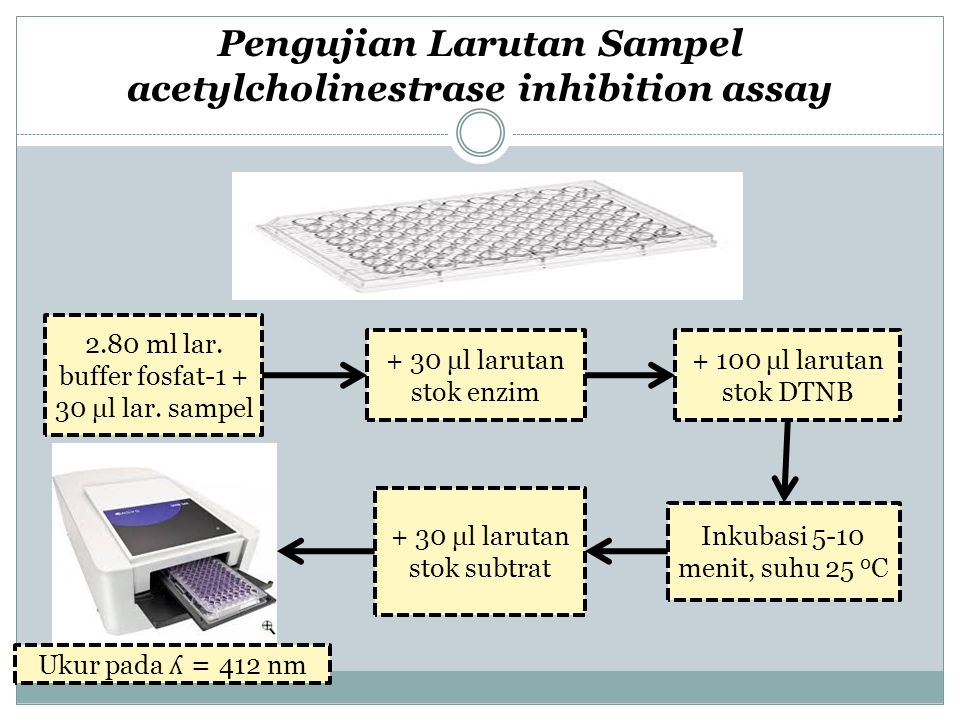 Pengujian Larutan Sampel acetylcholinestrase inhibition assay