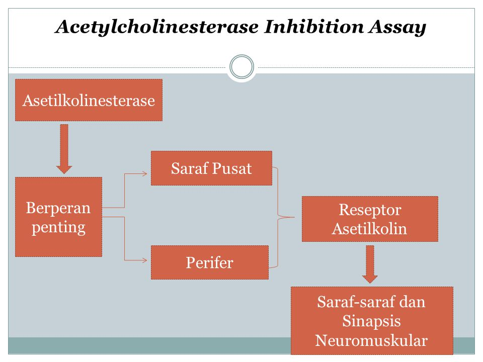 Acetylcholinesterase Inhibition Assay