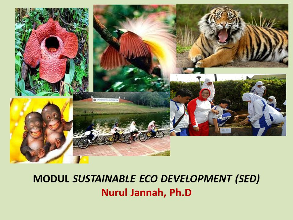 MODUL SUSTAINABLE ECO DEVELOPMENT (SED) Nurul Jannah, Ph.D