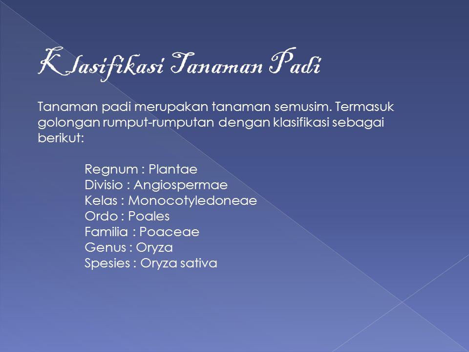 Klasifikasi Tanaman Padi