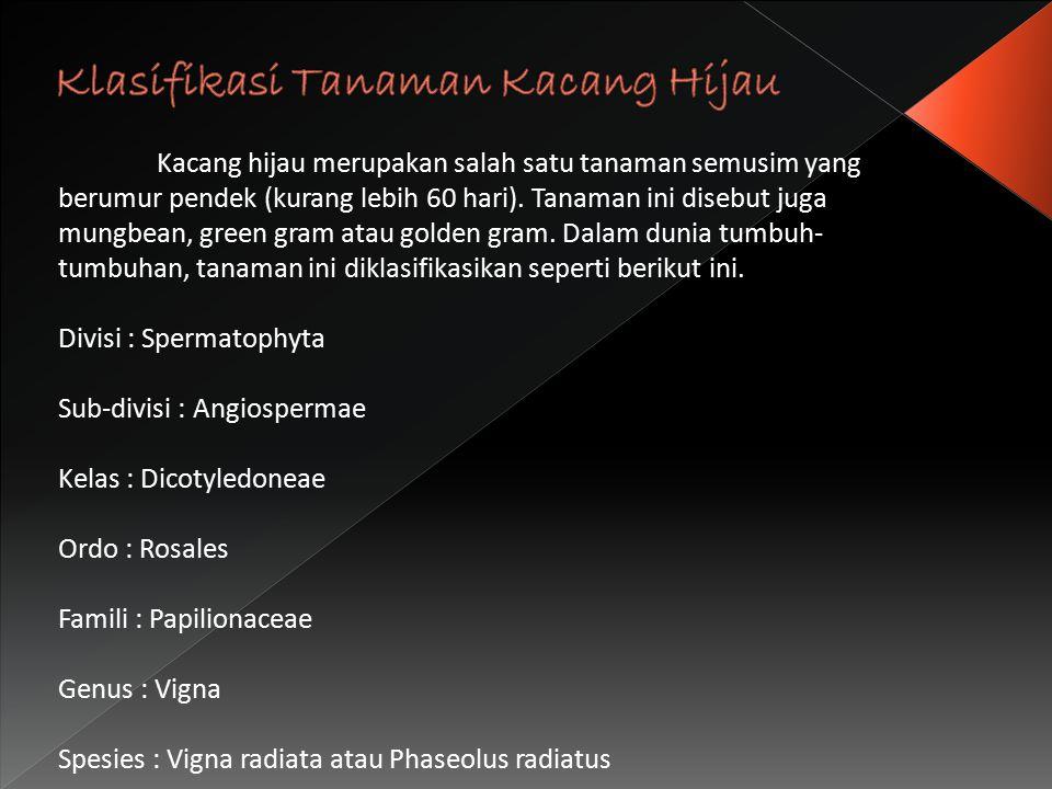 Klasifikasi Tanaman Kacang Hijau