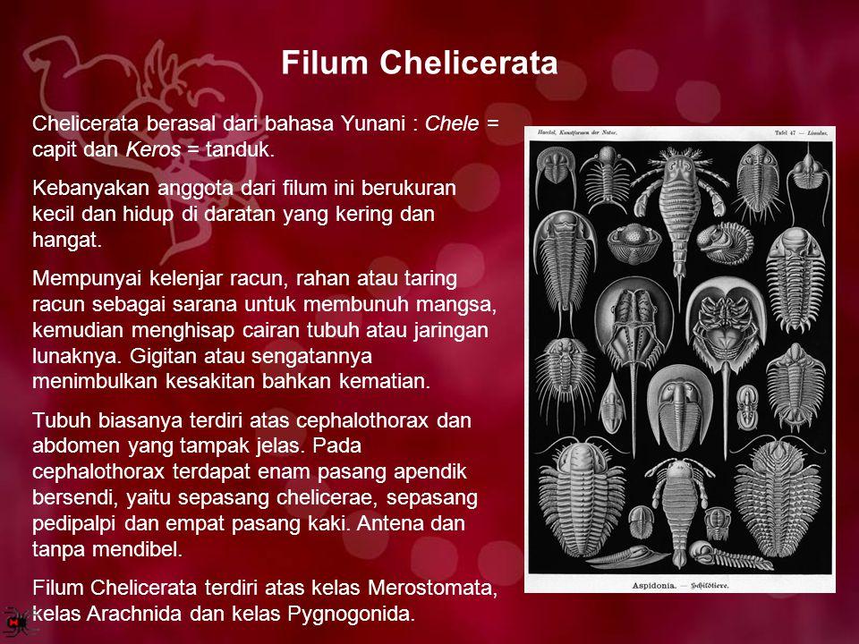 Filum Chelicerata Chelicerata berasal dari bahasa Yunani : Chele = capit dan Keros = tanduk.