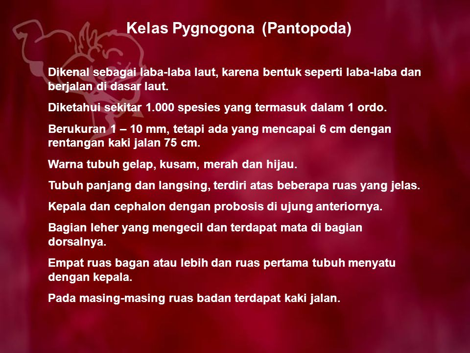Kelas Pygnogona (Pantopoda)