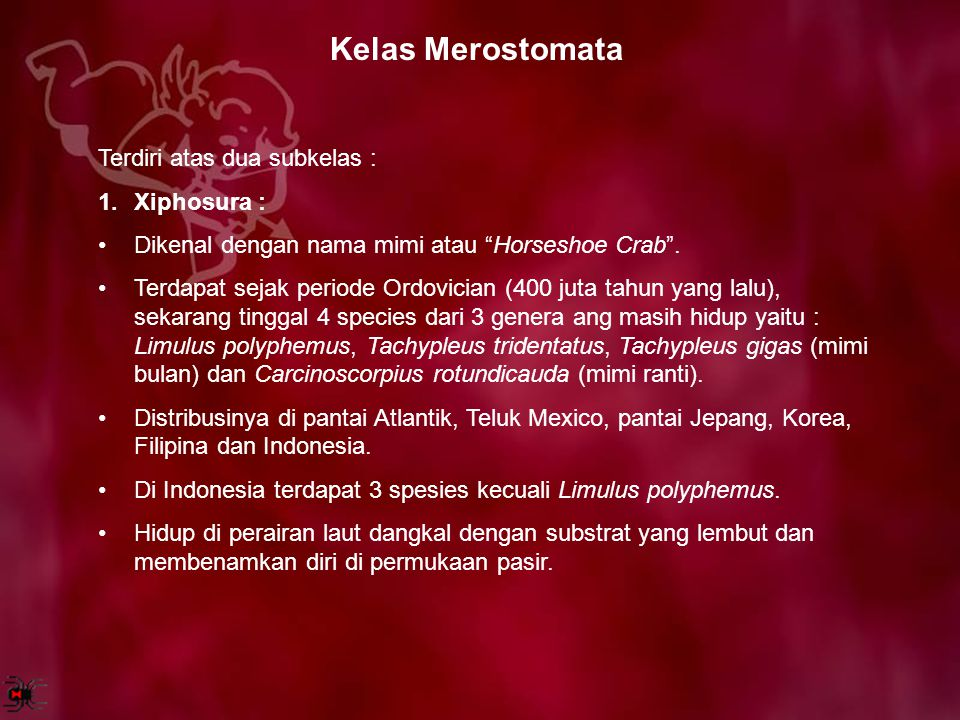 Kelas Merostomata Terdiri atas dua subkelas : Xiphosura :