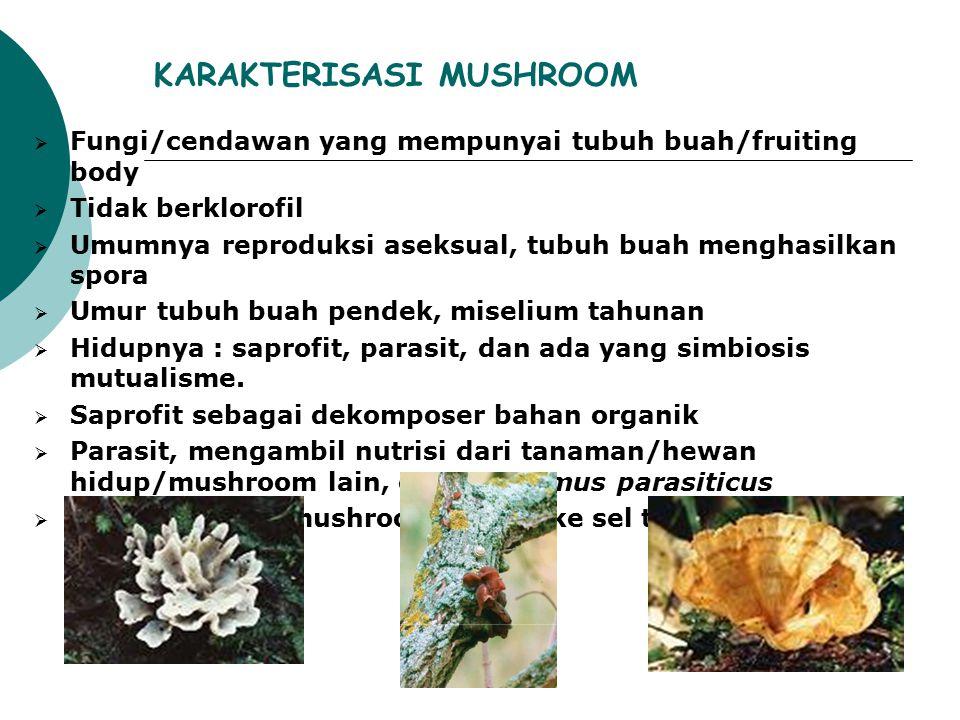 KARAKTERISASI MUSHROOM