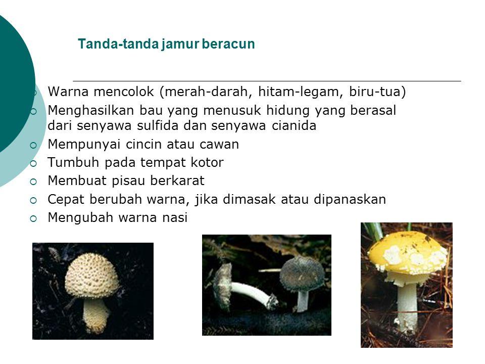 Tanda-tanda jamur beracun