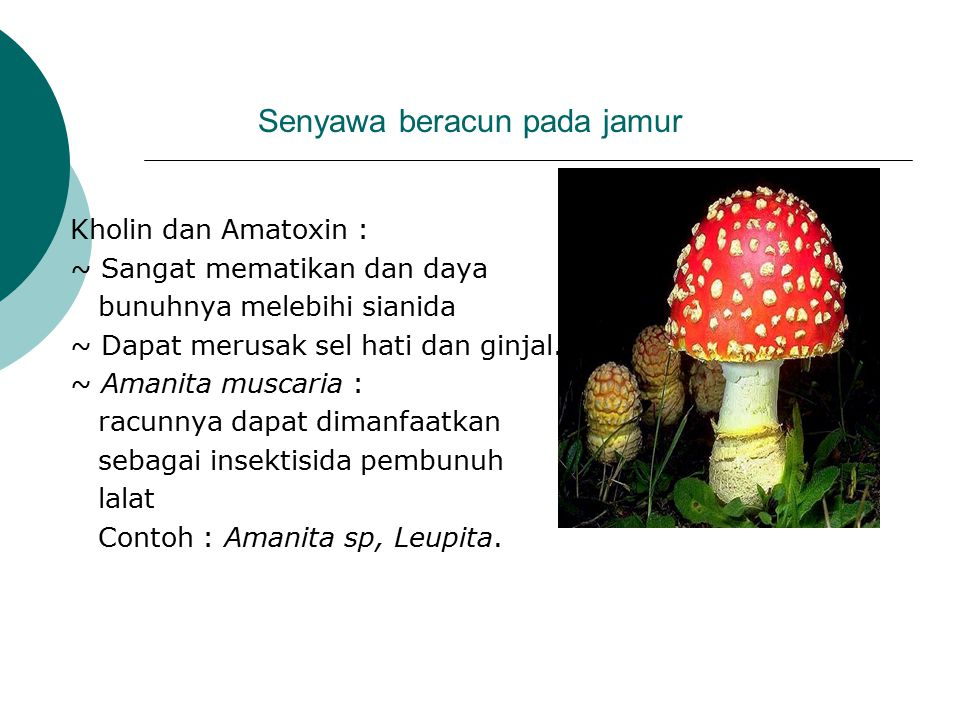 Senyawa beracun pada jamur