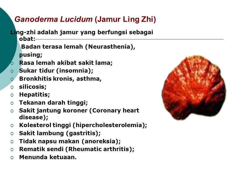 Ganoderma Lucidum (Jamur Ling Zhi)