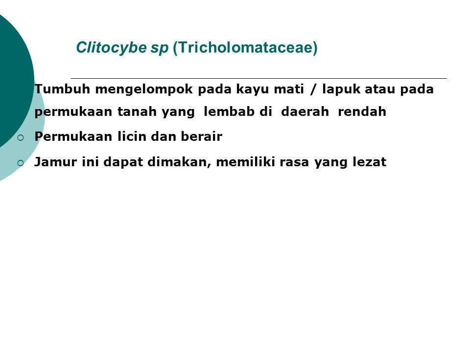 Clitocybe sp (Tricholomataceae)
