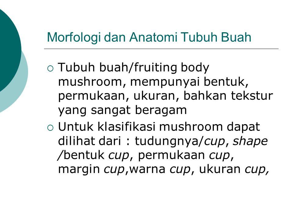 Morfologi dan Anatomi Tubuh Buah