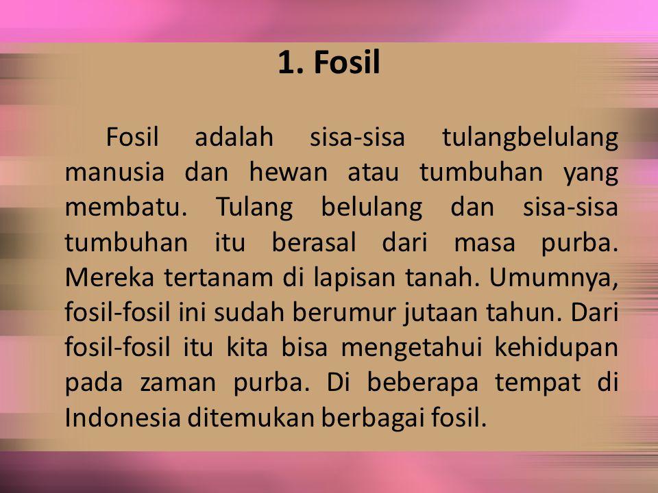 1. Fosil