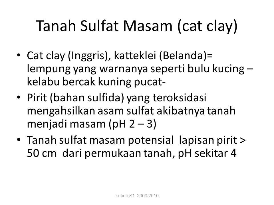 Tanah Sulfat Masam (cat clay)