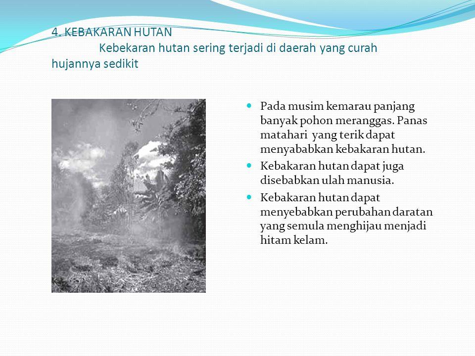 4. KEBAKARAN HUTAN Kebekaran hutan sering terjadi di daerah yang curah hujannya sedikit