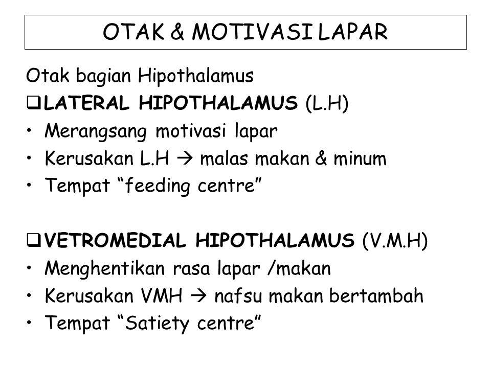 OTAK & MOTIVASI LAPAR Otak bagian Hipothalamus