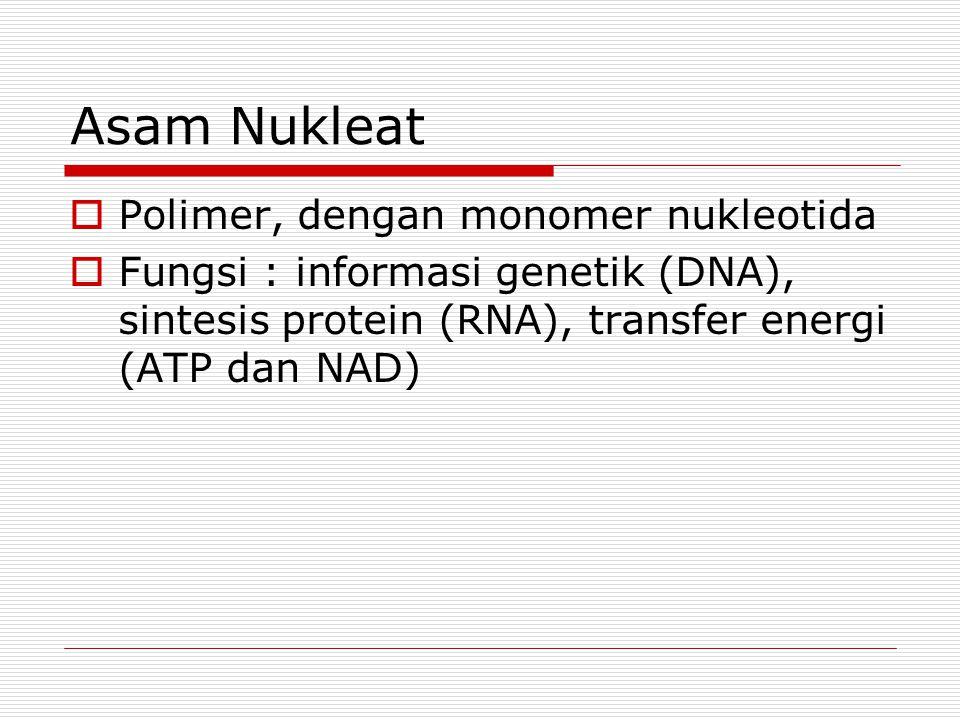 Asam Nukleat Polimer, dengan monomer nukleotida