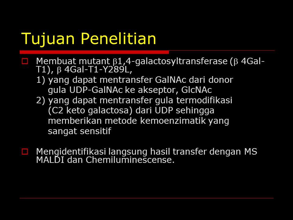 Tujuan Penelitian Membuat mutant 1,4-galactosyltransferase ( 4Gal-T1),  4Gal-T1-Y289L, 1) yang dapat mentransfer GalNAc dari donor.