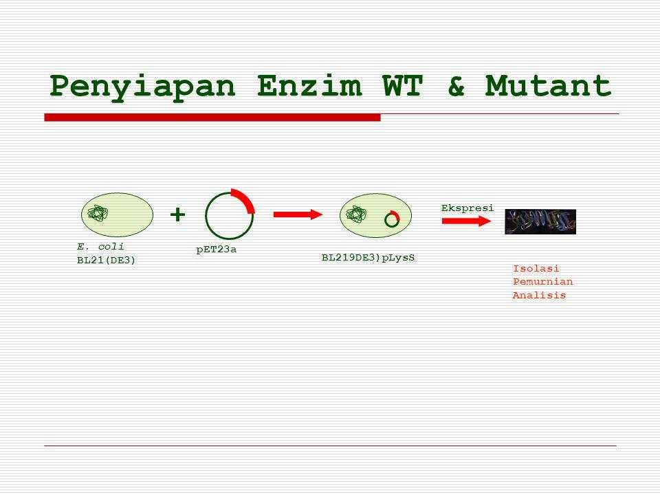 Penyiapan Enzim WT & Mutant