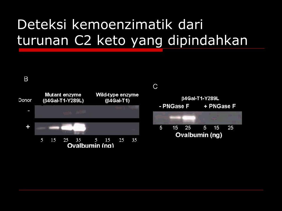 Deteksi kemoenzimatik dari turunan C2 keto yang dipindahkan